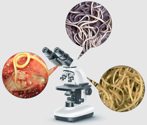 AntiToxin Nano – recenze – diskuze – forum – výsledky